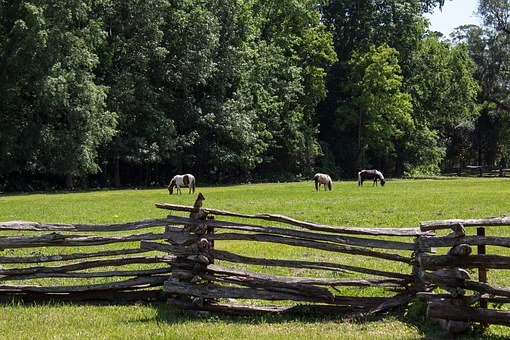 Pasture, Pony, Fence, Lattice, Horse, Animal, Farm