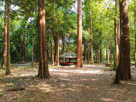 Conolly's Plot, Teak Plantation, Forest, Nature, Teak