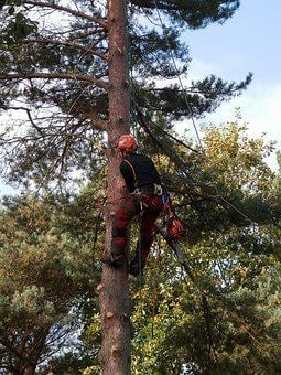 Tree Surgeon, Tree Logger, Chainsaw, Forestry