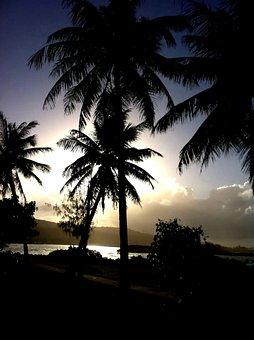 Guam, Tropical, Far, East, Sea, Island, Water, Palms