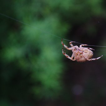 Spider, Insect, Jumping Spider, Web Spider, Creepy