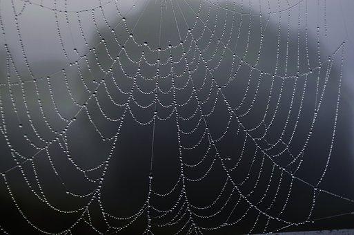 Spider Web, Rosa, Fog, Macro, Drops, Closeup