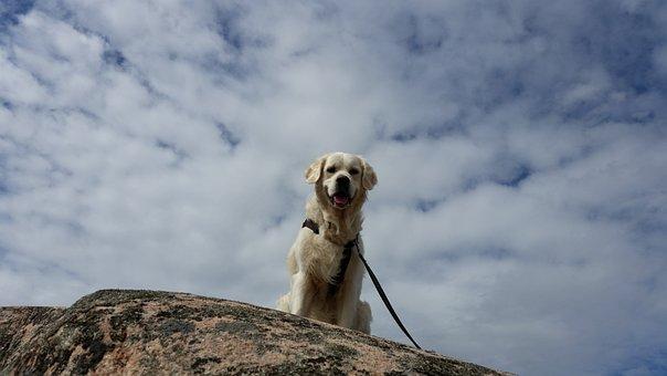 Himmel, Dog, Bohuslän, Mountain