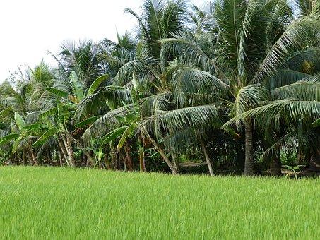 Agriculture, Tropics, Tropical, Nature, Vegetation