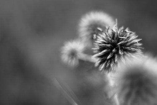 Flower, Nature, Depth Of Sharpness, Beauty, Life
