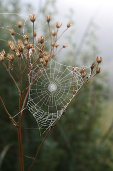 Spider, Web, Grass, Morning, Dew, Insect, Outdoors