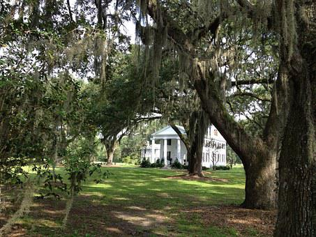 South, House, Plantation, America, Spanish Moss