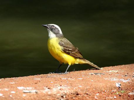 Colorful Bird, Bird On The Ground, Tropical, Ray