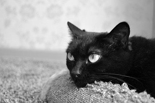 Black Cat, Scratching Posts, Pet, Black, Furry, Fur
