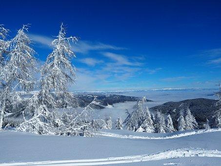 Skiing, Snow, Runway, Winter Sports, Ski Run, Skier