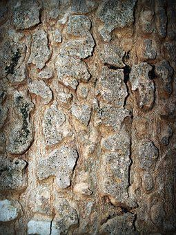 Bark, Tree, Wood, Pine, Background, Abstract, Skin