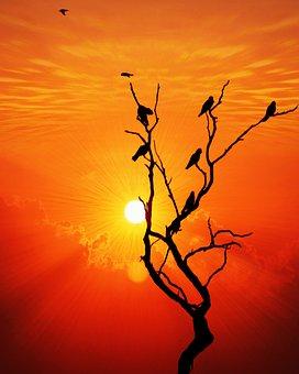 Sunset, Bird, Ray, Nature, Sky, Landscape, Sunrise, Sun