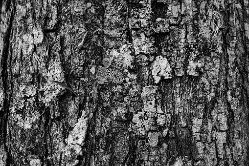 Texture, Tree, Black And White, Branch, Hardwood