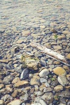 Drift Wood, Lake, Lake Constance, Beach, Nature, Wood