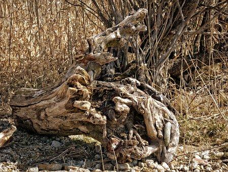 Bleak, Lonely, Flotsam, Drift Wood, Beach, Wood, Nature