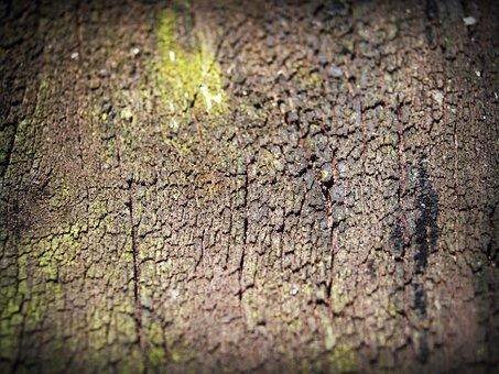 Bark, Tree, Wood, Pine, Background, Abstract, Skin