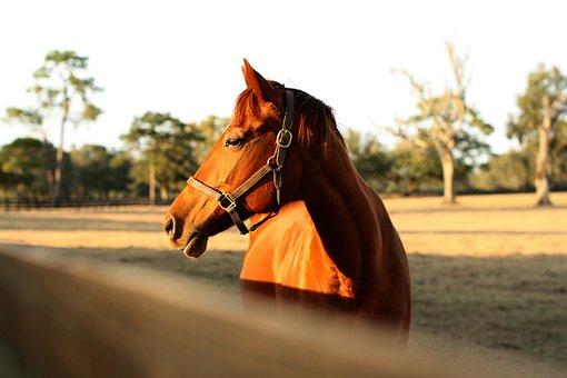 Horse, Farm, Light, Fence, Animal, Mammal, Sunset