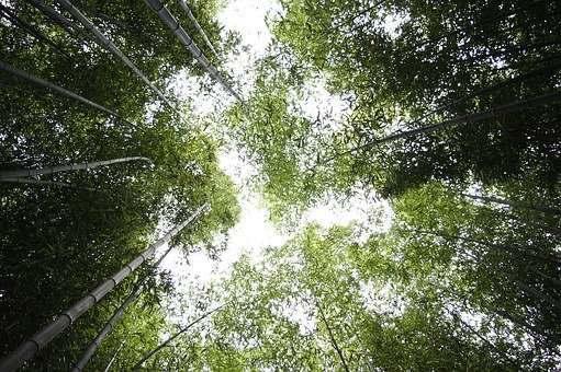 Bamboo, Sky, Forest, Nature, Vs Grove, Plants, Break