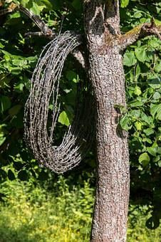 Barbed Wire, Tree, Wire, Barbed Wire Roll, Role, Hang