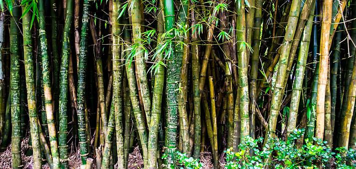 Nature, Forest, Bamboo, Plants, Hawaii