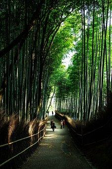 Kyoto, Japan, Natural, Bamboo, Green, Bamboo Forest