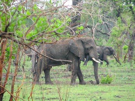 Malawi, Africa, Landscape, Elephants, Wildlife, Bush