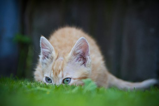 Cat, Hiding, Grass, Funny, Animal, Kitten, Playing