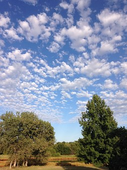 Outside, Blue Sky, White Clouds, Trees, Cottonwoods