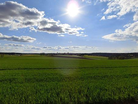 Landscape, Fields, Cornfield, Agriculture, Rural