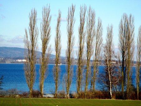 Trees, Poplars, Group, Bank, Lake, Mood, Background