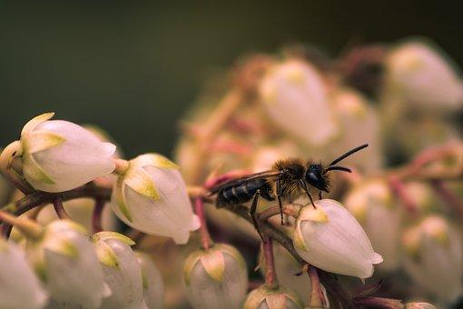 Insect, Fly, Animal, Nature, Macro, White, Bug, Eye