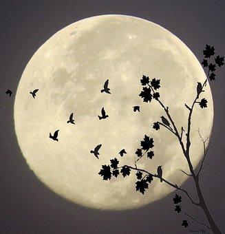 Midnight Flight, Moonlight Flight, Moonlight, Fly
