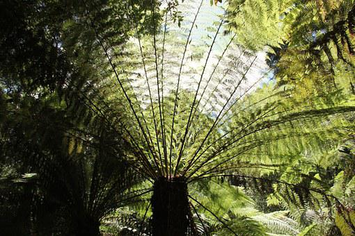 Of Giant, Fern, Plant, Green, Sprouted Grains, Growth