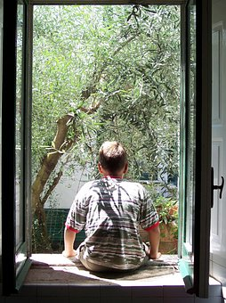 Window, Guy From Behind, Olivo, Olive Tree, Trees