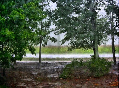 Raining, Trees, Forest, Woods, Rain, Thunder, Puddles