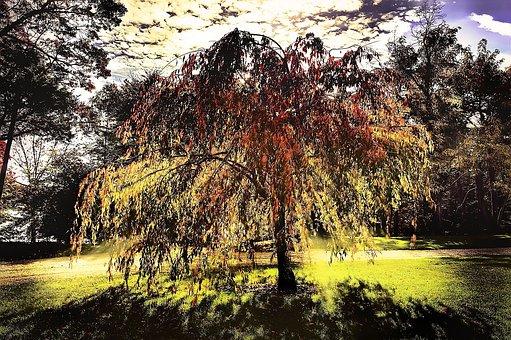 Tree, Sunlight, Shadows, Glowing, Effects, Focus