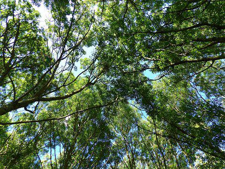 Trees, Diving Against, Nature, Trunk, Uplight, Forest