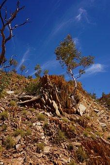 Mount Isa, Queensland, Urquhart Shale, Snappy Gum