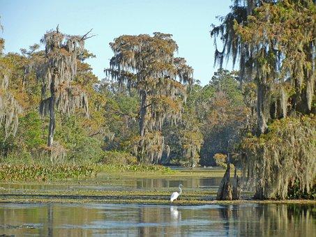 Florida, Wakulla Springs, Usa, Manatee