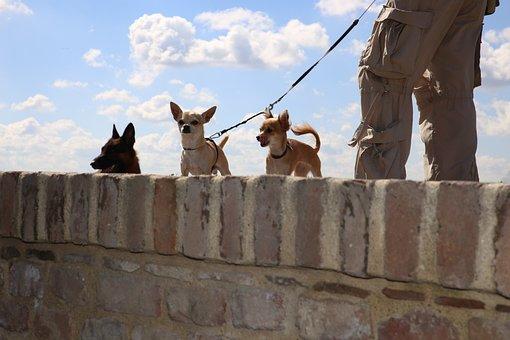 Dogs, Little, Big, Sky, Wall, Chihuahua