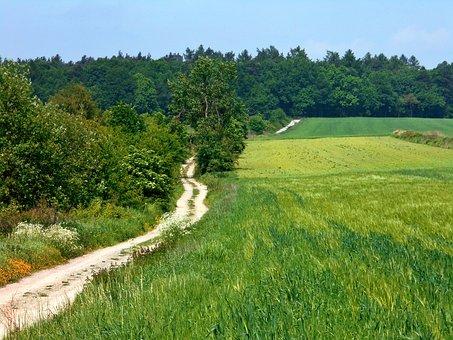 Landscape, Way, Fields, Green, Poland, Bolechowice