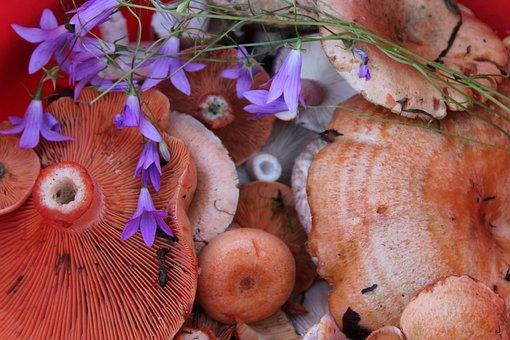 Mushrooms, Saffron Milk Cap, Bell