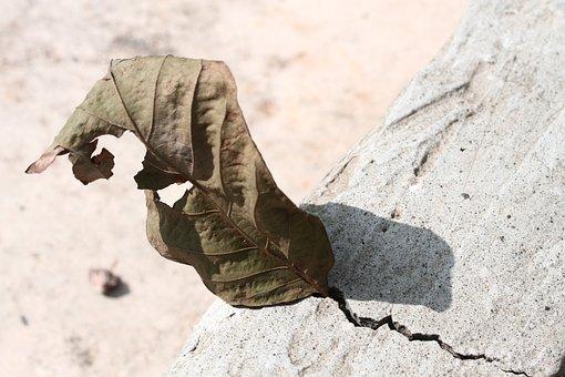 Leaf Blight Commission, Dry Commission