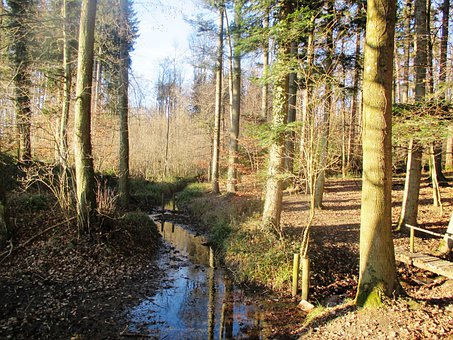 Forest, Bach, Water Running, Fairy Tale Forest