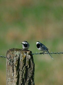 Mercury Tail, Birds, Nature