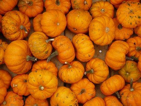 Mini Pumpkins, Pumpkin, Mandarin, Orange, Mini Pumpkin