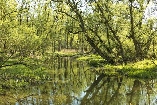 Nature, Green, Spring, Water, Tree Trimmer, Plant, Reed