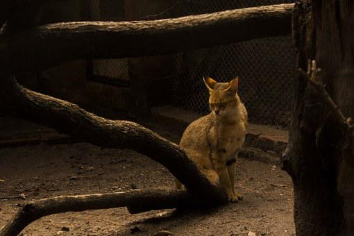 Cat, Wood, Shy, Alone, Poor, Scrubby, Black Cat