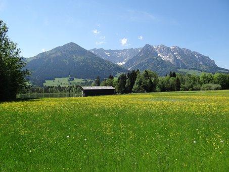 Spring Meadow, Kaiserwinkl, Tyrol, Zahmer Kaiser