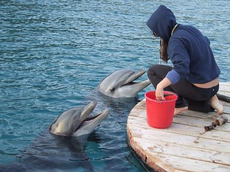 Trainer With Dolphin, Two Dolphins, Trainer, Ocean